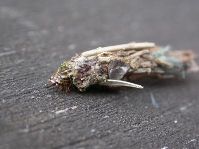 fourreau larvaire